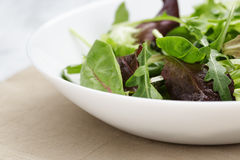 Mesclun mix salad in white bowl Royalty Free Stock Images