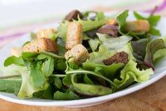 Mesclun salad. With crouton Royalty Free Stock Photos