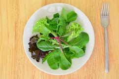 Mesclun salad Royalty Free Stock Photography