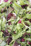 Mesclun salad mix with tongs Stock Image