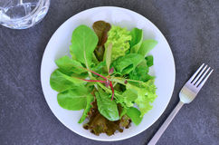 Mesclun Salat Lizenzfreies Stockbild
