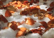 Mescolamento di stagioni Immagine Stock
