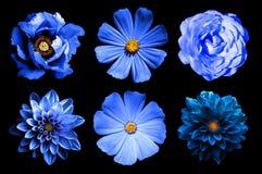 Mescoli il collage dei fiori naturali e surreali 6 del blu in 1: dalie, primule, rosa e peonia isolata fotografia stock libera da diritti