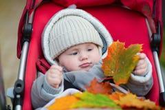 9 meses de muchacho en el cochecito que juega con las hojas Imagen de archivo libre de regalías