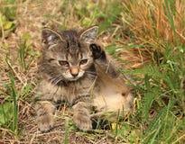 3 meses del gatito Imagenes de archivo