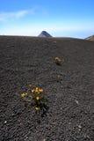 Meseta de la cumbre de Volcan Acatenango cerca de Antigua, Guatemala Fotos de archivo libres de regalías