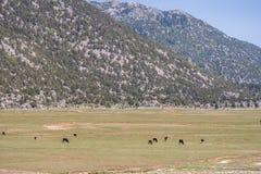 Meseta en Taurus Mountains Imagen de archivo