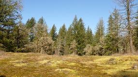 Meseta enselvada del claro del bosque con los cielos azules y los árboles claros fotografía de archivo