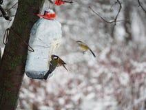 Mesfåglar äter från hemlagad förlagematare i vinter arkivbild
