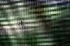 Mesh Doing insettifugo il suo lavoro Immagini Stock