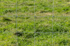 Mesh fence with green meadow background. Close-up pentagon mesh fence on green meadow background stock photos