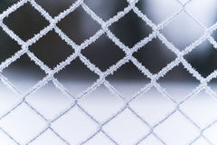 Mesh fence. icy. frost on the grid fence stock photo