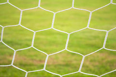 Mesh and the grass. Stock Image