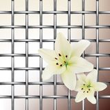 Mesh with lilies Stock Image