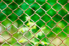 Mesh netting and blurred the back . Textured background.  royalty free stock image
