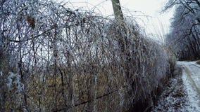 Mesh netting winter stock footage