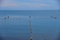 Mesh in seacoast and the birds -  cormorant and seagull Royalty Free Stock Photography
