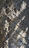 Mesh wire wounded over a bark Stock Image