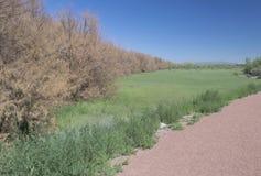 Mesilla树丛北视图 图库摄影