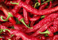 Mesilla: Cayenne-type chili Royalty Free Stock Images