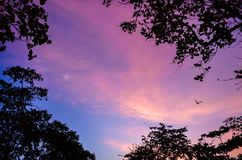 Mesmerising, beautiful and colorful twilight. Bird, tree and half moon. Mesmerising, beautiful and colorful twilights evening after sunset. Bird, tree and half royalty free stock image
