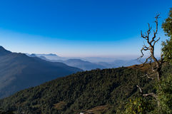Mesmerizing landscape of moist decidous & coniferous forest in Kedarnath wildlife sanctuary from Deoria Tal trail in Uttrakhand. Royalty Free Stock Photography