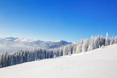 Mesmeryzować białego drzewa i białej góry Obrazy Royalty Free