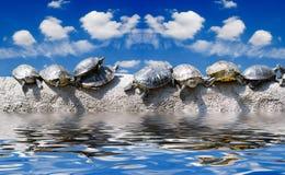 Mesmo as tartarugas já sunbathe no s Imagens de Stock