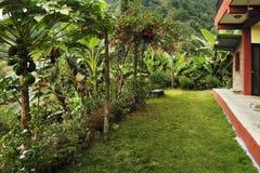Mesmo um gramado verde brilhante na frente da casa nos trópicos, s Fotos de Stock Royalty Free