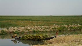 Mesopotamian träsk, livsmiljö av Marsh Arabs aka Madans Basra Irak royaltyfria foton
