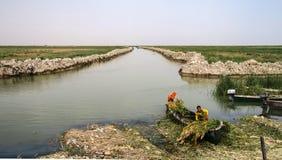 Mesopotamian träsk, livsmiljö av Marsh Arabs aka Madans iraq royaltyfria bilder