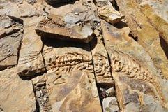 Mesosaurus stone reliefs at Spitzkoppe Farm near Keetmanshoop. Namibia: Mesosaurus stone reliefs at Spitzkoppe Farm near Keetmanshoop in the Region of Karas Royalty Free Stock Images