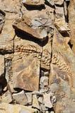 Mesosaurus stone reliefs at Spitzkoppe Farm near Keetmanshoop in Karas. Mesosaurus stone reliefs at Spitzkoppe Farm near Keetmanshoop in the Region of Karas Stock Images