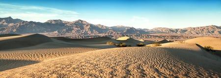 Mesquie dunes pano Stock Image