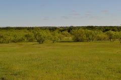 Mesquite dans les plaines Photographie stock libre de droits