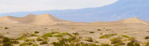 Mesquite Dunes at dawn Stock Image