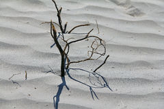 Mesquite Dunes. A dead tree in the Mesquite Dunes Stock Photography