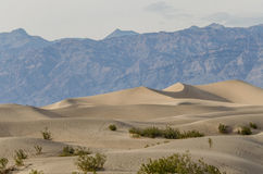 Mesquite Dunes in Death Valley Royalty Free Stock Photo