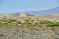 Mesquite Dunes in Death Valley National Park Stock Image