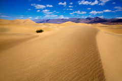 Mesquite Dunes desert in Death Valley National Park Royalty Free Stock Images