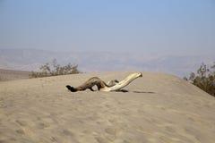 Mesquite Flat Sand Dunes Stock Photography