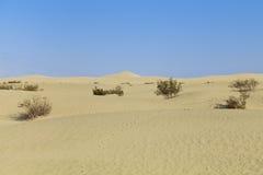 Mesquite Flat Sand Dunes Royalty Free Stock Photo