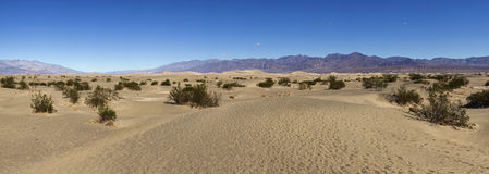 Mesquite flat sand dunes desert in Death Valley Stock Photography