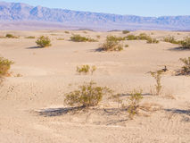 Mesquite Flat Sand Dunes Royalty Free Stock Photography