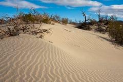 Mesquite Sand Dunes Stock Image