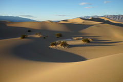 Mesquite sand dunes in death valley california. Desert landscape in Death Valley USA Royalty Free Stock Photo