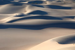 Mesquite Sand Dunes Royalty Free Stock Image