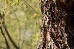 Mesquite tree bark. Detail view of mesquite tree bark Stock Photo