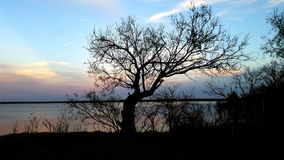 Mesquite tree at lake with blue skies Royalty Free Stock Image