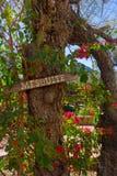 Mesquiteträd med tecknet Arkivbilder